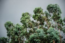 Free Green Trees Background Stock Image - 84904311