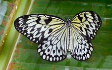 Free Paper Kite.Malaysia. &x28;9&x29; Stock Image - 84905671