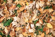 Free Autumn Leaves Royalty Free Stock Photo - 84906255