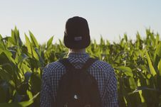 Free Man Wearing Black Fitted Cap Facing Corn Field Royalty Free Stock Photos - 84907988