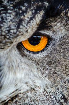 Free Gray Owl Showing Orange And Black Left Eye Stock Image - 84910181