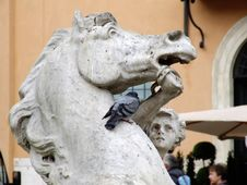 Free Italy Vatican - Creative Commons By Gnuckx Royalty Free Stock Photo - 84911705