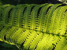 Free Fern Leaf Royalty Free Stock Images - 84912239