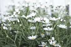Free Field Of Wildflowers Stock Photos - 84914143