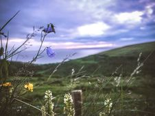 Free Blue And Yellow Flower On Grass Field Under Cloudy Sky During Daytime Royalty Free Stock Images - 84914599