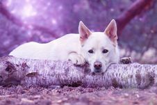 Free Dog Lying On Tree Trunk Stock Images - 84915604