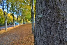 Free Tree Trunk And Autumn Leaves Royalty Free Stock Photos - 84917708