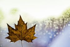 Free Autumn Leaf And Sparkling Background Royalty Free Stock Photo - 84917905