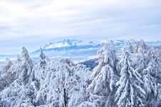 Free Snow Covered Forest And Mountains Royalty Free Stock Photography - 84918047