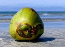 Free Coconuts Day At The Beach. Royalty Free Stock Photography - 84919217