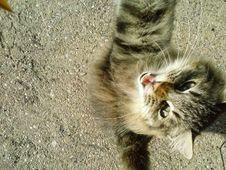Free Eye, Cat, Carnivore, Felidae Royalty Free Stock Photo - 84921795