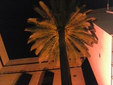 Free Palm Tree In Courtyard At Night Royalty Free Stock Photos - 84921828