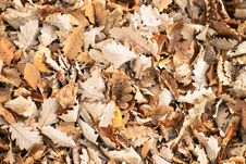 Free Autumn Leaves Royalty Free Stock Images - 84922779