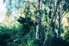 Free Bird Feeder On Tree Stock Photo - 84923370