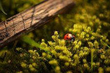Free Ladybird Beetle Stock Images - 84923624