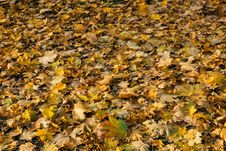 Free Fallen Leaves Stock Image - 84923691