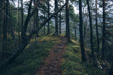 Free Forest Trail On Mountainside Royalty Free Stock Photography - 84924027