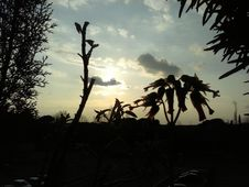 Free Silhouette Of Plants At Sunset Stock Images - 84924124