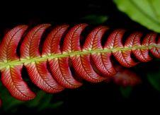 Free Blechnum NZ Fern. Royalty Free Stock Image - 84924556