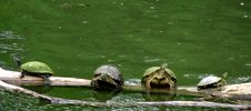 Free Turtle Party Stock Photography - 84924672