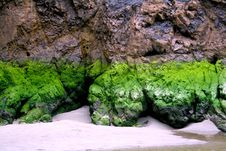 Free Moss At The Beach Stock Image - 84925661