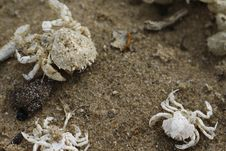 Free Crabs On The Beach Royalty Free Stock Photography - 84926497