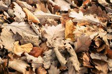 Free Autumn Leaves Royalty Free Stock Photos - 84926998
