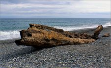 Free West Coast Beaches Of New Zealand Stock Photography - 84927022
