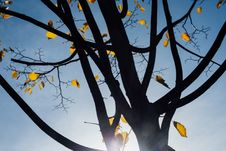 Free Autumn Tree Leaves Royalty Free Stock Photography - 84927097
