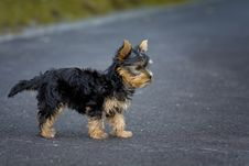 Free Tan Black Puppy Royalty Free Stock Photography - 84927677