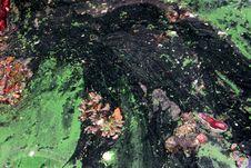 Free Pond With Algae Stock Photography - 84928162