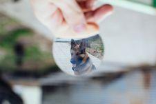 Free German Shepherd Dog Royalty Free Stock Photo - 84928375
