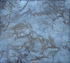 Free Eucalyptus Leaf Sidewalk Ghosts Stock Photos - 84928623