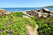 Free Wildflowers On Rocky Coastline Royalty Free Stock Image - 84929066