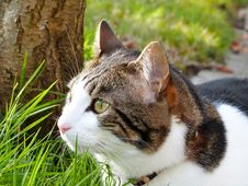 Free Domestic Cat In Green Grass Royalty Free Stock Image - 84929236