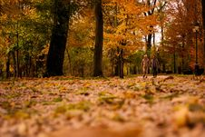 Free View Of Trees In Forest During Autumn Royalty Free Stock Photography - 84929267