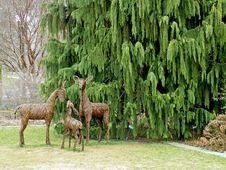Free Deer Family Royalty Free Stock Photos - 84929458