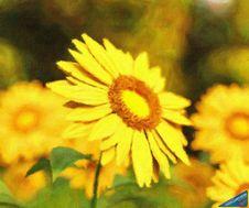 Free Sunflower - ID: 16218-130647-2498 Royalty Free Stock Photos - 84930938