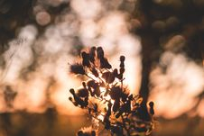 Free Thistle In Sunset Light Stock Photo - 84931060