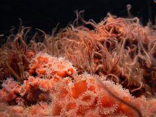 Free Anemones &x28;6&x29; Stock Photography - 84931192