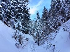 Free Evergreen Forest In Winter Royalty Free Stock Photography - 84933107