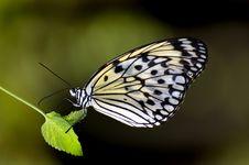 Free Paper Kite.Malaysia. Royalty Free Stock Photos - 84933618