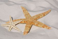 Free White And Orange Star Fish Side By Side At The Sand Stock Photography - 84933702