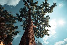 Free Brown Tree During Day Royalty Free Stock Photo - 84933995