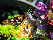 Free Butterfly On Purple Flower Stock Image - 84934171