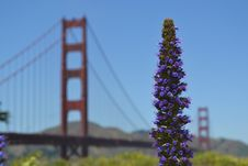 Free Purple Flower With The Golden Gate Bridge In The Distance Stock Images - 84934854