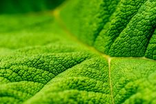 Free Green Leaf Close Up Photography Stock Photos - 84934903
