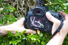 Free Person Holding Black Canon Dslr Camera Stock Photo - 84934990