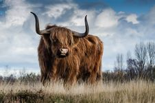 Free Brown Bull On Green Glass Field Under Grey And Blue Cloudy Sky Royalty Free Stock Image - 84935066