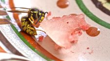 Free Wasp Vs. Melon Royalty Free Stock Photography - 84935097